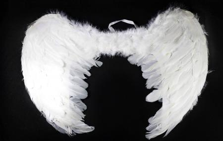 Feather Wings White Small 60X45CM-0